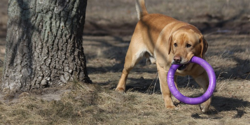 Корм Роял Канин (Royal Canin) для собак купить в Минске