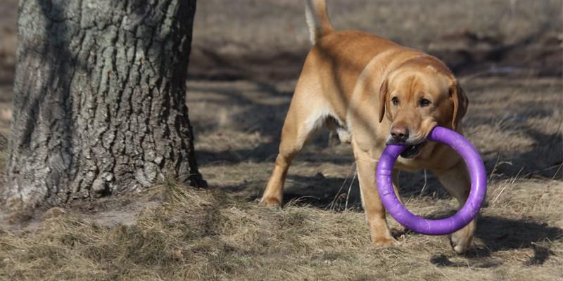 Купить корм Royal Canin Mini Junior для щенков — Роял
